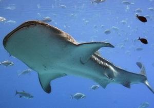 Биологи изучают гидродинамические эффекты акульей кожи