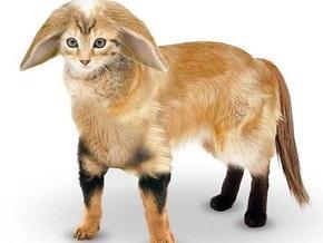Британцы создали изображение идеального домашнего любимца, скрестив четырех животных
