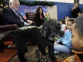 Первой собакой  Америки станет португальская водная собака