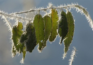 погода в Украине - В начале недели в Украине ожидаются заморозки до -5 градусов