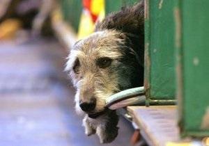 Попов: Мы не давали распоряжения травить собак