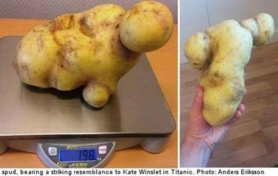 В Швеции нашли картофелину, похожую на Кейт Уинслет в Титанике