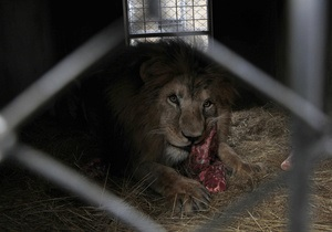 Новости США - странные новости: В США ресторан отозвал из продажи блюдо с мясом льва