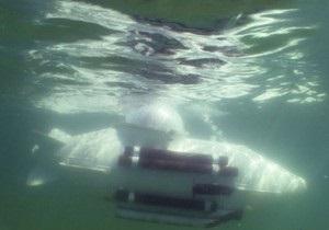 Изобретатель из Одессы сконструировал самую маленькую в Украине подводную лодку