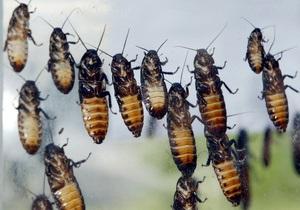 Новости США - странные новости: В США автобусный рейс прервали из-за тараканов
