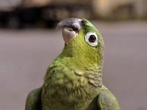 В Мариуполе попугай матерится и шокирует отдыхающих