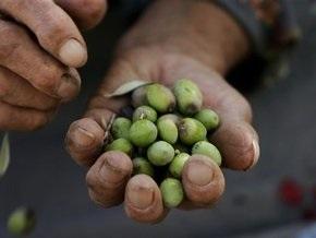 Оливковое масло защитит от рака груди
