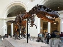В Польше нашли останки ранее неизвестного науке динозавра