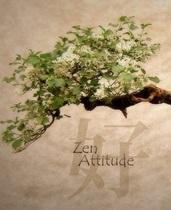 Zen-консультирование доступно теперь и в Екатеринбурге