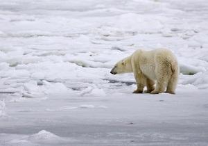На Ямале белый медведь гнался за экологами пять километров