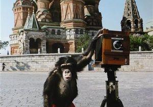 Новости Великобритании - аукцион Sotheby s: Фотографии, сделанные на Красной площади шимпанзе, продали за 50 тысяч фунтов