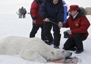 Ученые прекратили наблюдение за медведем, на которого Путин надел спутниковый ошейник