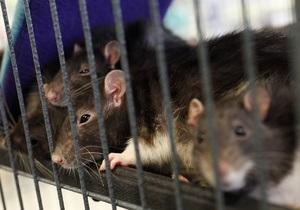 Бешеная крыса укусила восьмиклассника