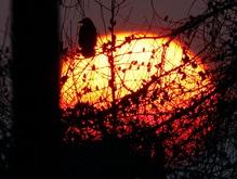 Новый солнечный цикл грозит землянам ухудшением самочувствия