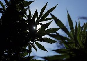 Американец украл в полицейском участке пакетик марихуаны