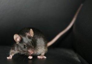 В Швеции мужчина запустил в дом бывшей жены выводок мышей