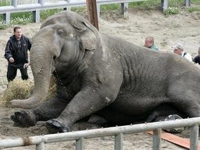 СМИ: Депутаты Киевсовета обсудят ситуацию в столичном зоопарке
