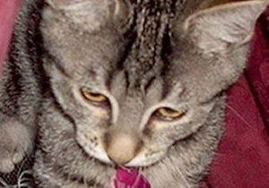 Жену британского депутата признали виновной в краже котенка