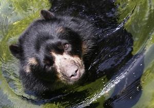 Жителям Сибири посоветовали шуметь в лесу и не смотреть медведю в глаза