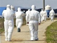 Японским сотрудникам сделают прививки от птичьего гриппа