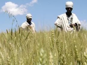 Эфиопия просит у доноров помощи, чтобы спасти от голода шесть миллионов человек