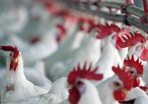 Россия снимает запрет на ввоз мяса птицы из Украины