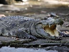 В Рио-де-Жанейро крокодилы заползают во дворы к местным жителям