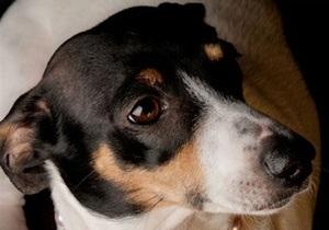 Защитники животных требуют строго наказать 19-летнего киевлянина, убивавшего бездомных собак