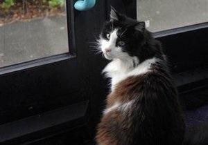 Самый знаменитый кот Британии погиб под колесами автомобиля