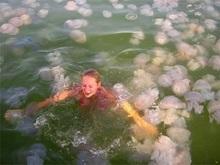 Побережье Крыма атаковали медузы