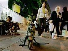 Испанские парламентарии наделили обезьян правами человека
