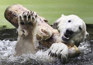 Фотогалерея: Прощай, медведь. В Берлинском зоопарке скончался знаменитый медведь Кнут