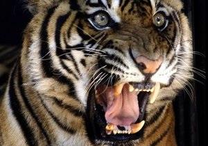 В России по пути на цирковое шоу погибли восемь тигров и львица