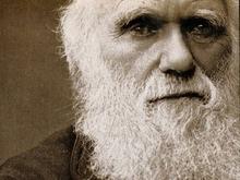 В США обнародованы имена лауреатов премии Дарвина