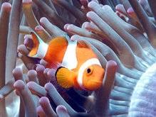 Мультфильм В поисках Немо привел к истреблению рыб-клоунов