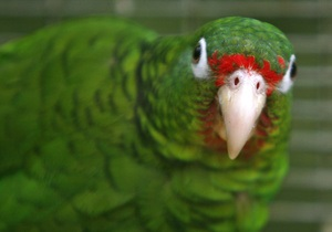 Новости Казахстана - странные новости: Житель Казахстана пытался покончить с собой после кончины любимого попугая