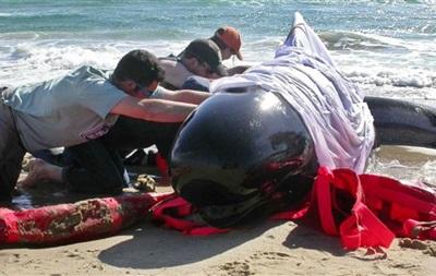 Во время спасательной операции у берегов Флориды погибли десять китов