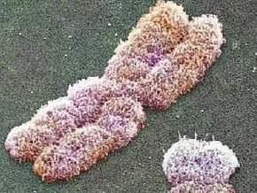 Ученым удалось остановить передачу болезней по наследству