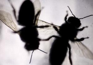 В Винницкой области пчелы напали на двух мужчин