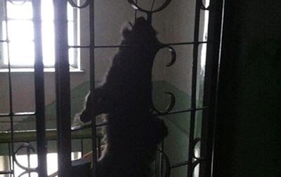 Неизвестные повесили кота перед дверью севастопольского активиста Евромайдана