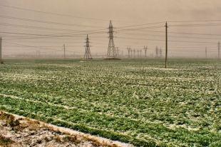 Аномально теплая зима не повредила посевам озимых – Присяжнюк