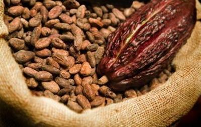 Мировые цены на какао падают, на фоне низкого качества продукции
