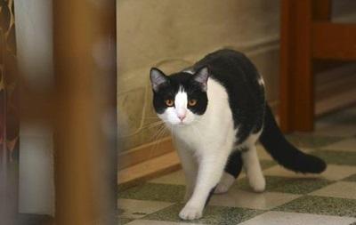 Хозяйка выгнала кота из дома за гомосексуализм