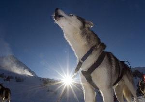 На Чукотке появится памятник собачьей ездовой упряжке