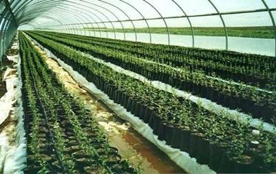 Правительство снизит цену газа и электроэнергии для развития тепличных хозяйств
