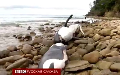 В Новой Зеландии выбросились на берег сразу девять китов