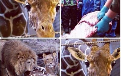 Кадыров хочет забрать в Чечню жирафа, приговоренного в Дании к смерти