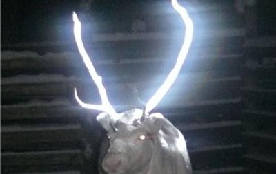 Оленей Лапландии снабдят светоотражающими рогами