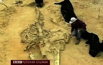 Тайна чилийского кладбища китов разгадана? - BBC
