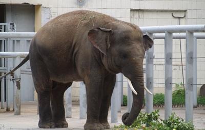 В киевский зоопарк пустят бесплатно